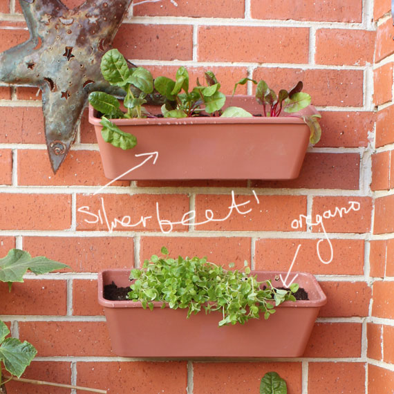 growing vertical herb garden