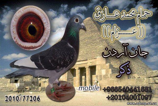 الهاوي والمتسابق المصري محمد عازق عزام على موقع عدن