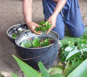 Making Ayahuasca just like the ancient Shamans