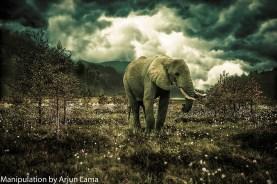simple elephant photo manipulation