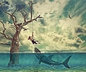 Shark-manipulation
