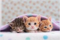 cute-kittens_7