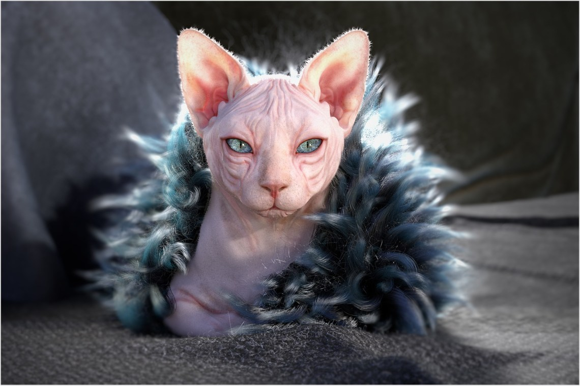 hairless-cat_2