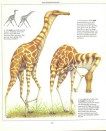 Lank - Pterosaurus mirip Jerapah. Gambar oleh Dougal Dixon.