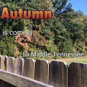 Autumn-Nature-Purpose