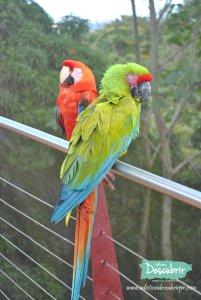 Parque Forestal La Marquesa
