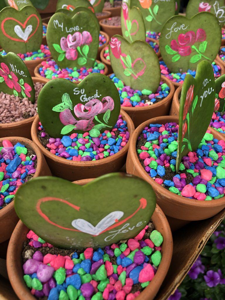 Festival de las Flores Aibonito