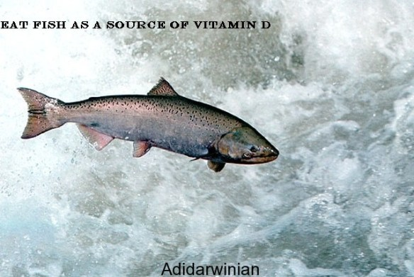 Health and Vitamin D The Vital Connection2 adidarwinian