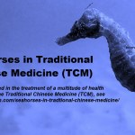 Seahorses in Traditional Chinese Medicine (TCM)