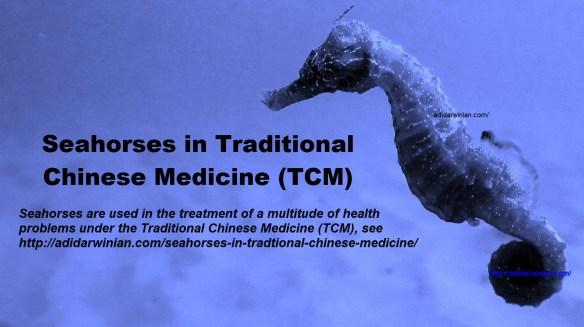 seahorses in trditional chinese medicine adidarwinian