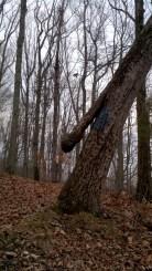 Tree headed snake