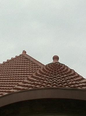St Paul Reptiliant Roof