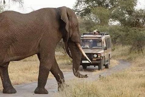 adimasu-safari-c-2