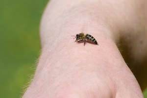 a bee lands on someones arm ready to sting them