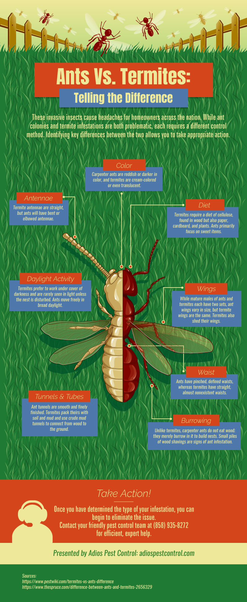 Infographic displaying the differences between ants and termites.