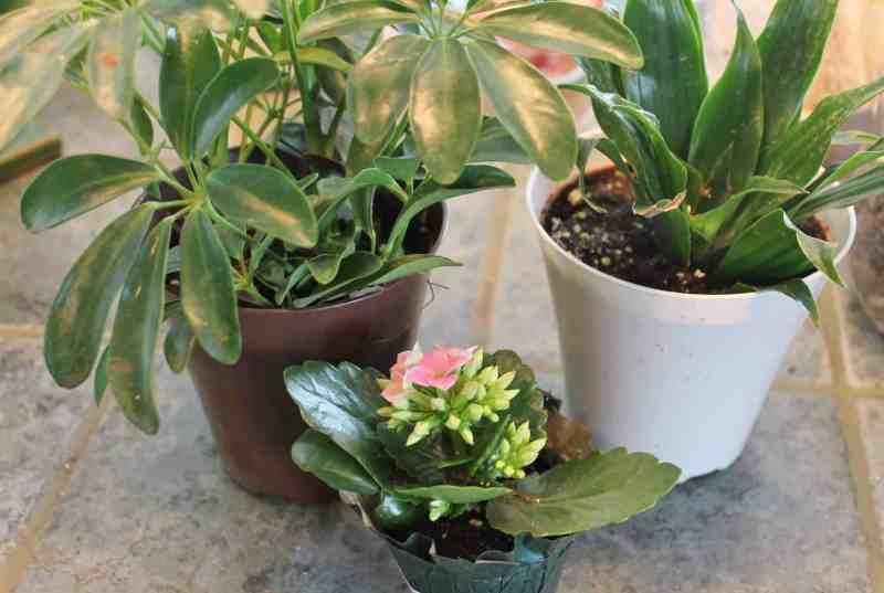 terrarim plants
