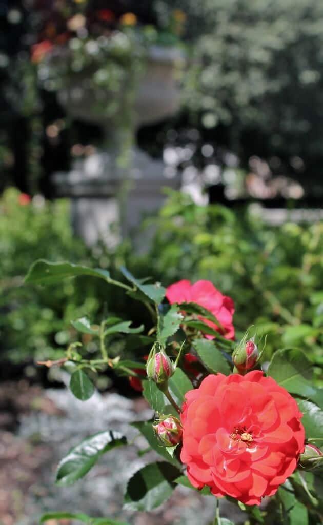 schuyler-manion-gardens-630x1024