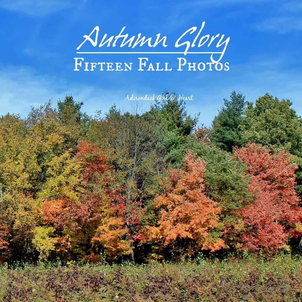 Beautiful fall foliage in the Northeast