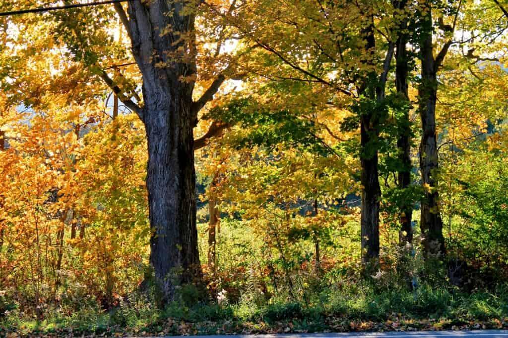 fall-folliage-yellow-1024x683