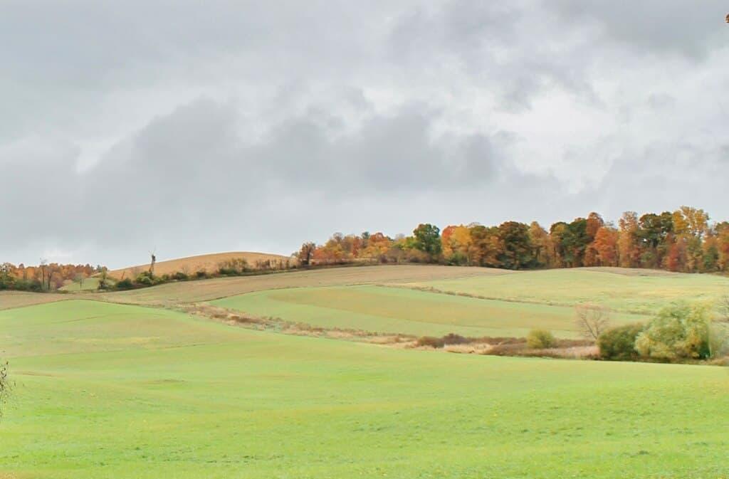 moody sky with fall foliage