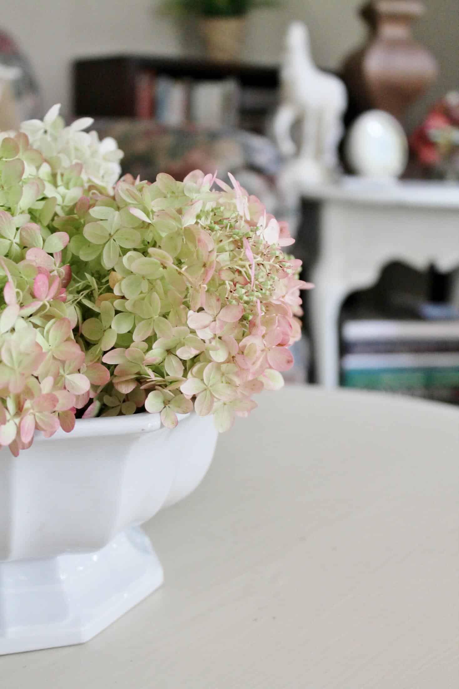 side view of hydrangea