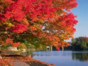 Fall at nearby 13th Lake