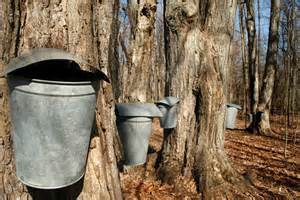 Nearby farms offer maple syrup demonstrations.