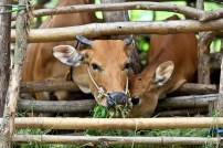 Dusun Ende sasak - aditya wardhana (1)