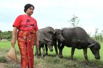 Sri kambing - Aditya Wardhana (1)