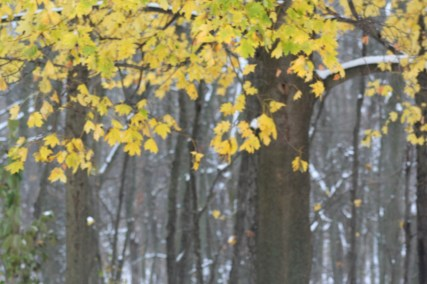 Winter Radiance (c)Gracie K Harold 2014
