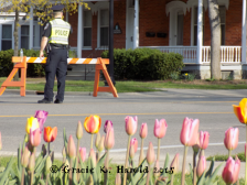 Tulip Time Safety