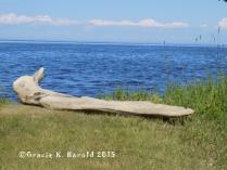 Whitefish Bay View, unedited 2