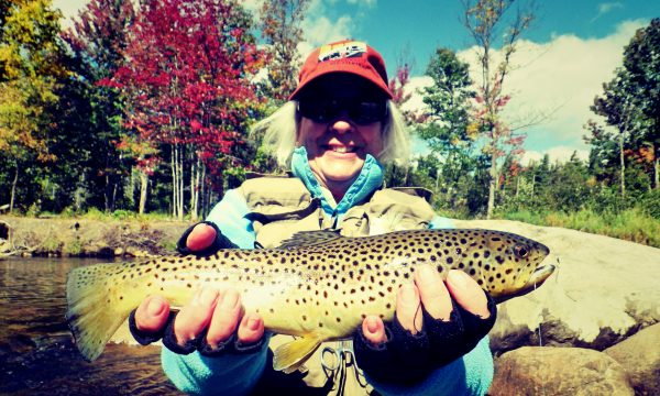 brown_trout_ausable