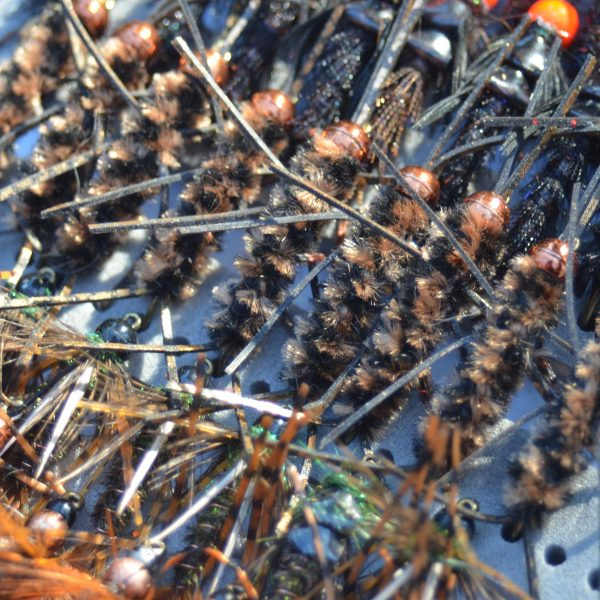 girdle bugs