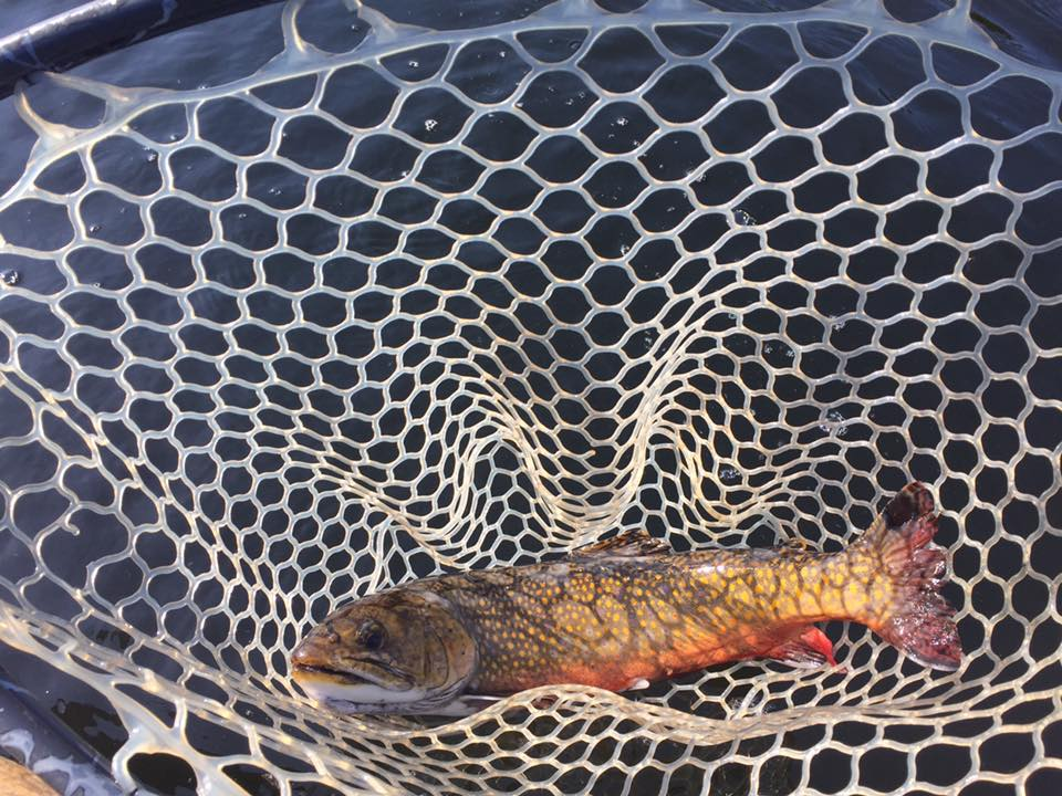 Trout-Brook-Fly-Fishing-Adirondack-New-York-NY