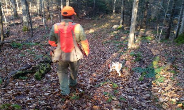 New-York-Hunting-Dog-NY-22