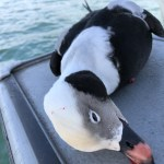 sea_duck_lake_ontario