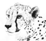 Cheetah Ink