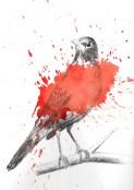 Robin Ink with Splatter