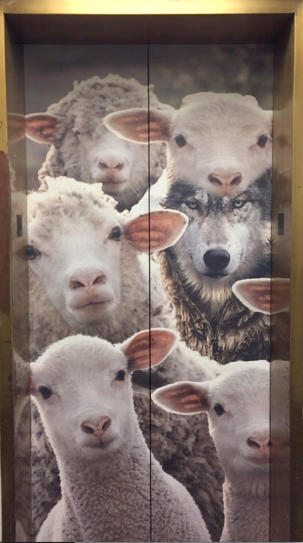 The closed elevator doors showing a wolf in sheep's clothing