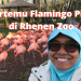 kebun binatang rhenen belanda