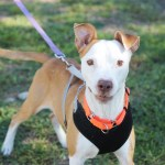 Wally available for adoption