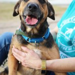 Buckaroo - Hound mix available for adoption at ADL main campus