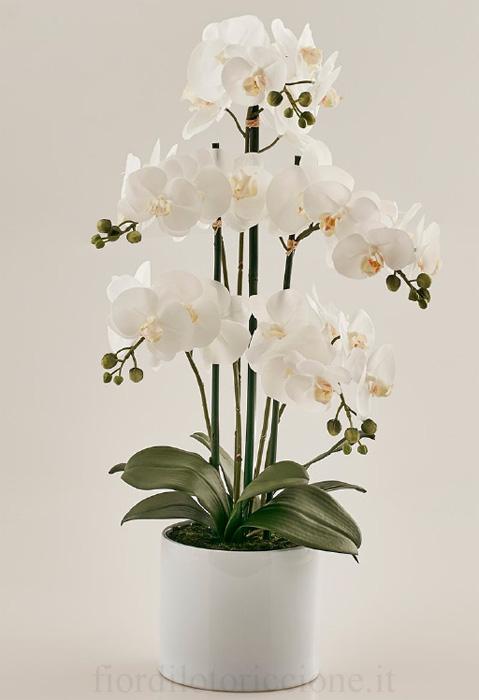 Pianta di Orchidea Maya  Scegli il Colore   Fior di