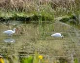 Wetland Treatment Project