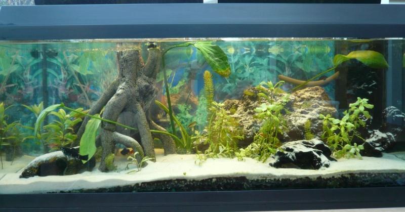 Calcul Du Poids Total Dun Aquarium