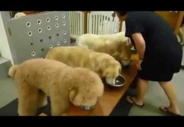 Dogs Say Prayer Before Eating