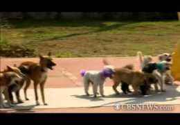 Dogs jumping rope