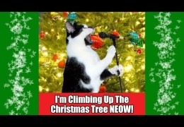 I'm Climbing Up The Christmas Tree NEOW 2013
