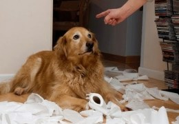 Guilty Dogs – Supercut Compilation 2013!